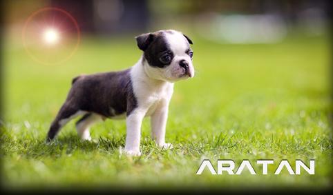 ARATAN-001