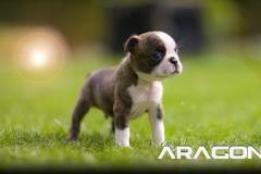 ARAGON001